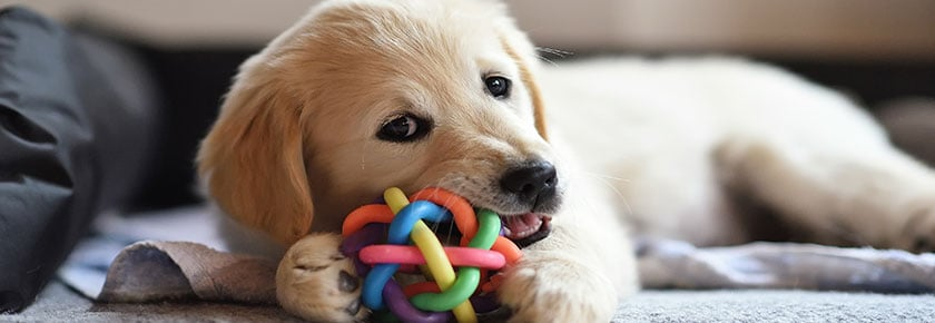 masticazione-cane