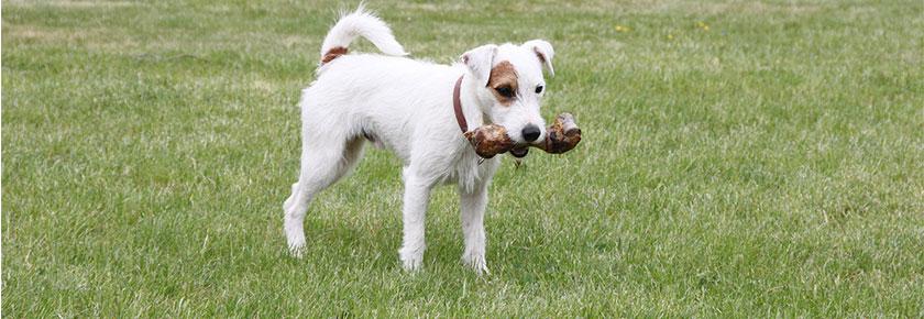dieta-raw-per-cani