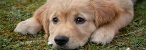 nefropatia-nel-cane